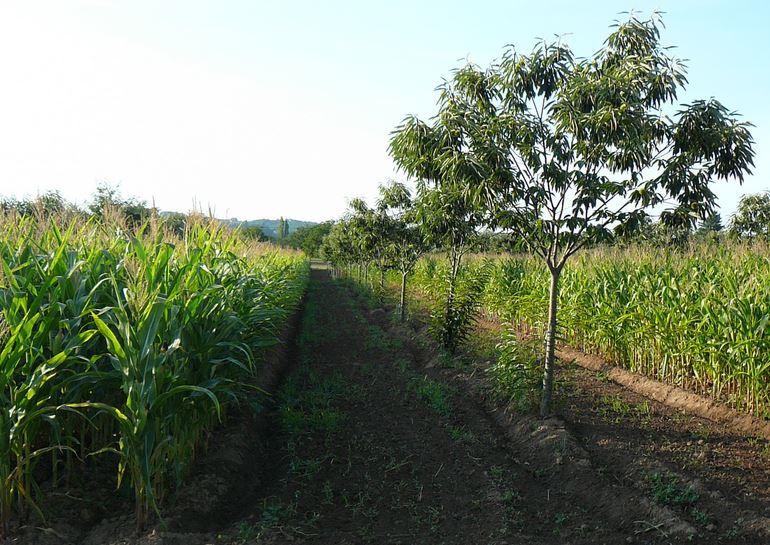 4ème Congrès mondial Agroforesterie: renforcer les liens