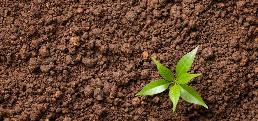 Prendre soin de la plan te commence par les sols m diaterre for Les decoratives brut de terre